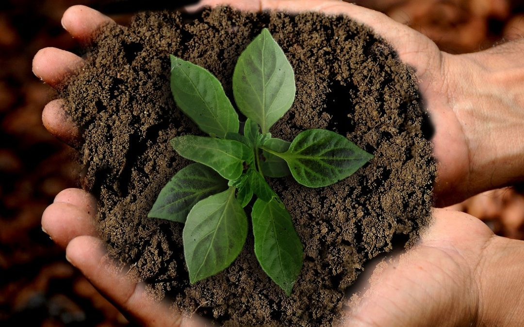 Hållbarhet – konsumentens nya fokus